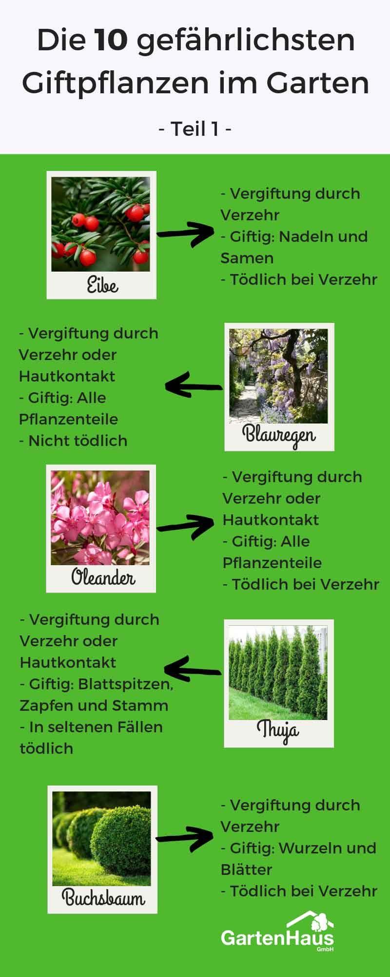 Die 10 Gefahrlichsten Giftpflanzen Im Garten Giftige Pflanzen Giftpflanzen Garten Bepflanzen