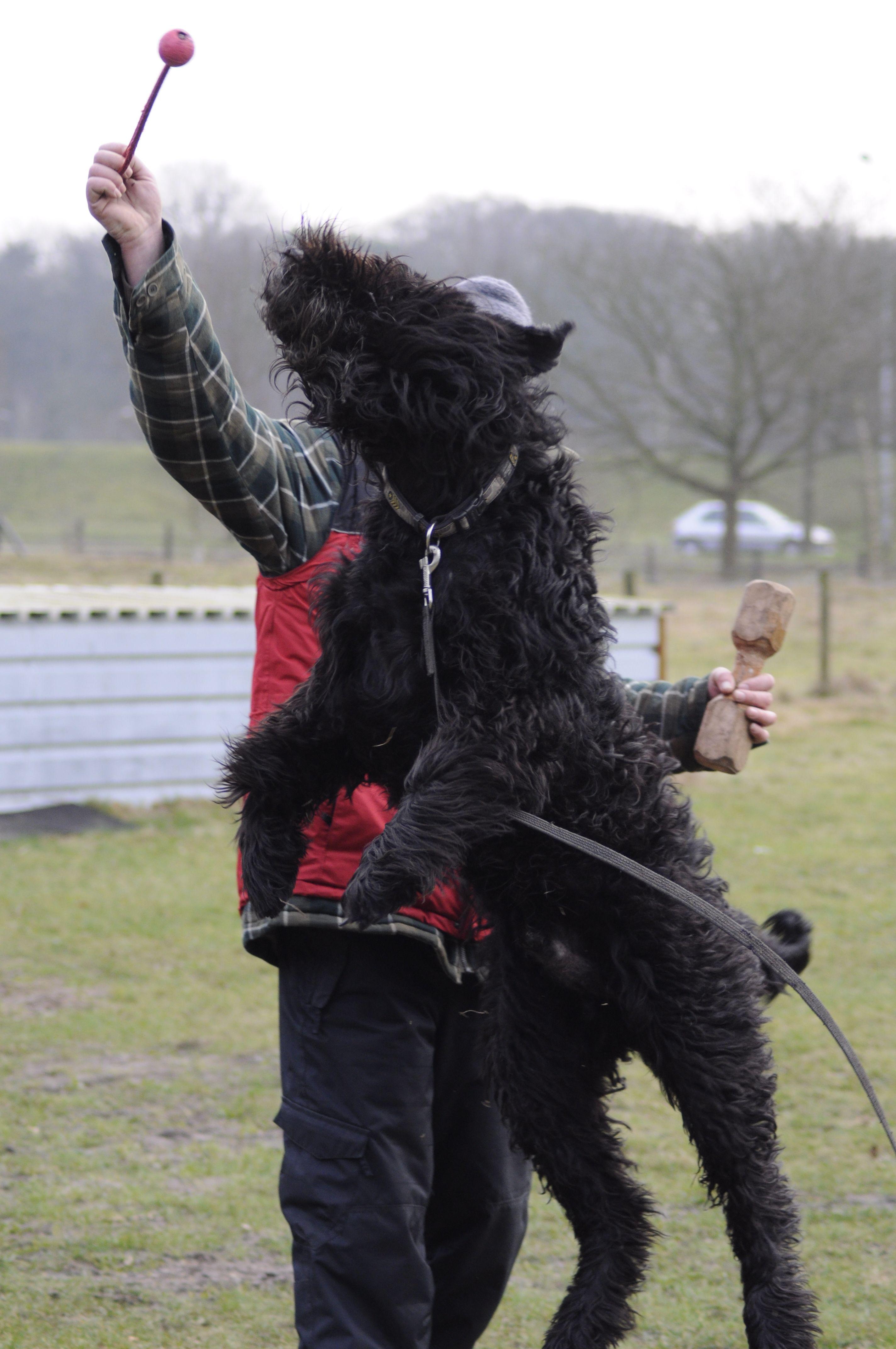 Seven van Bertrupaty Honden