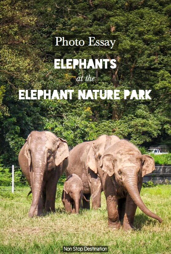 Photo Essay Elephant At The Nature Park Non Stop Destination Wildlife Travel An On