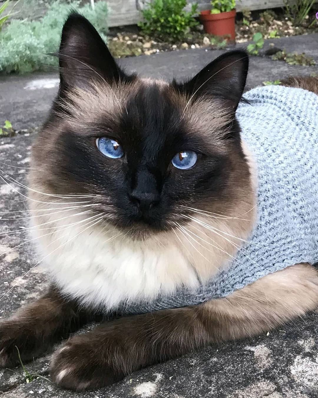 Do you want to see the best cats pictures ? #catbreeds