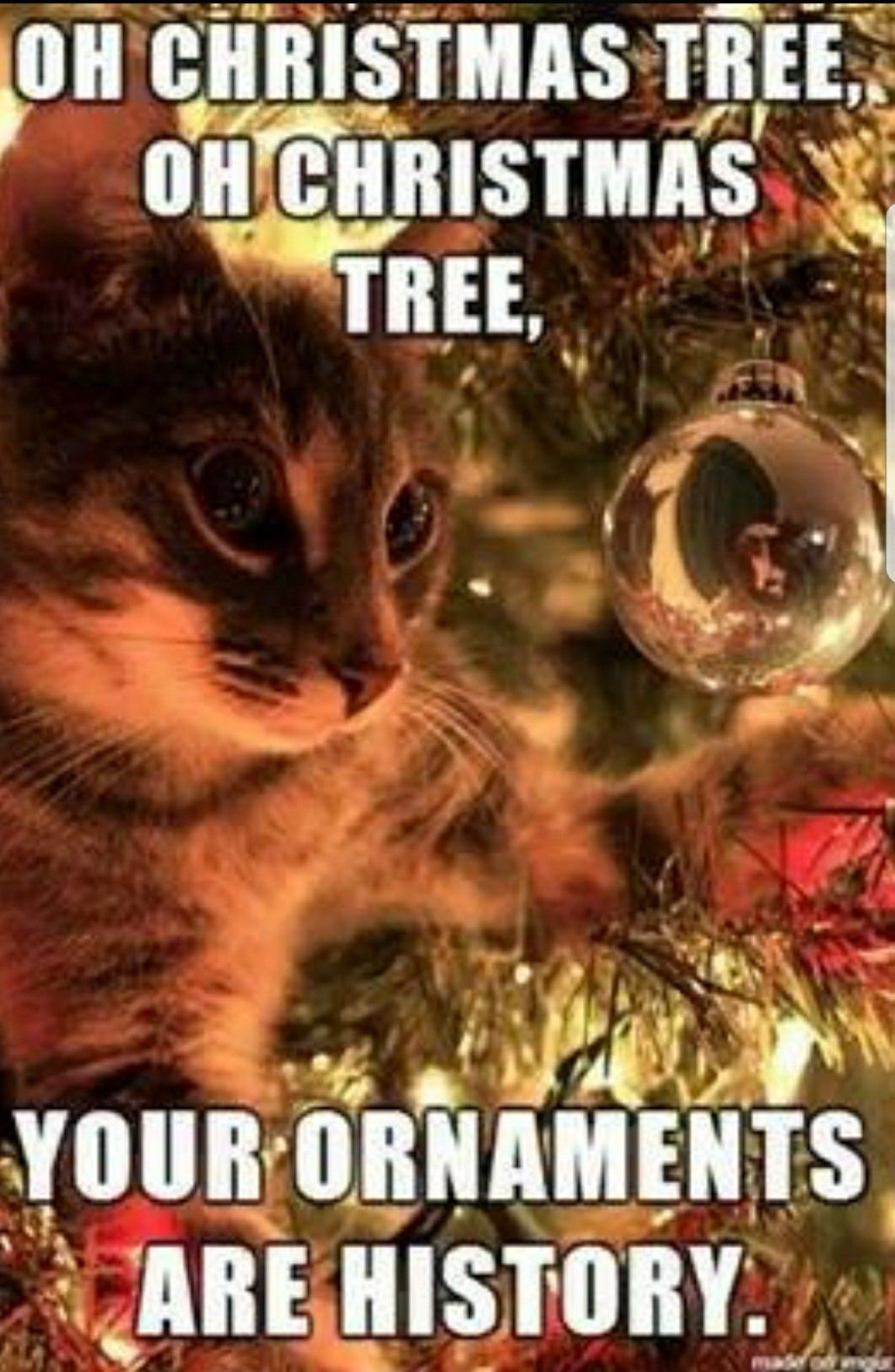 21 Hilarious Christmas Memes You Need In Your Life