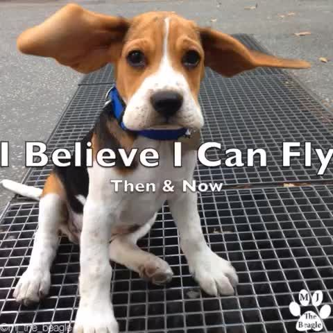 Watch Mj The Beagle S Vine I Believe I Can Fly By Mj The Beagle
