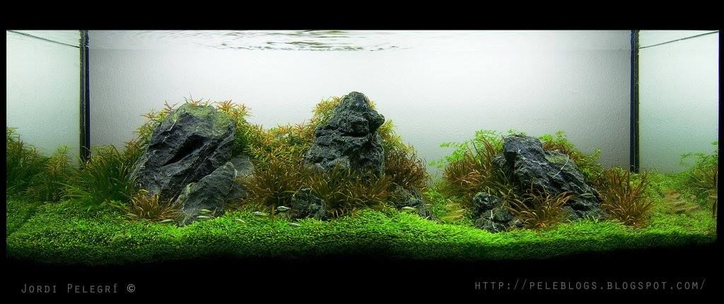 Favourites Tank By Jordi Pelegri I Must Admit That My Preference Are Iwagumis With A Touch Or Stem Plants To Soften T Aquascape Planted Aquarium Rock Textures