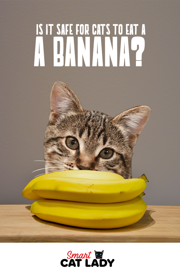 Is It Safe For Cats To Eat A Banana? Cats, Cat facts