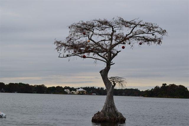 floating tree of hope