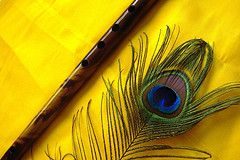 peacock feather and flute the symbols of lord krishna krsna