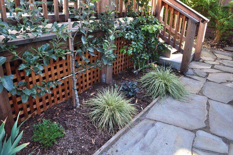 palmette horizontale espaliered apple pear un espalier ou palmette dans votre jardin. Black Bedroom Furniture Sets. Home Design Ideas