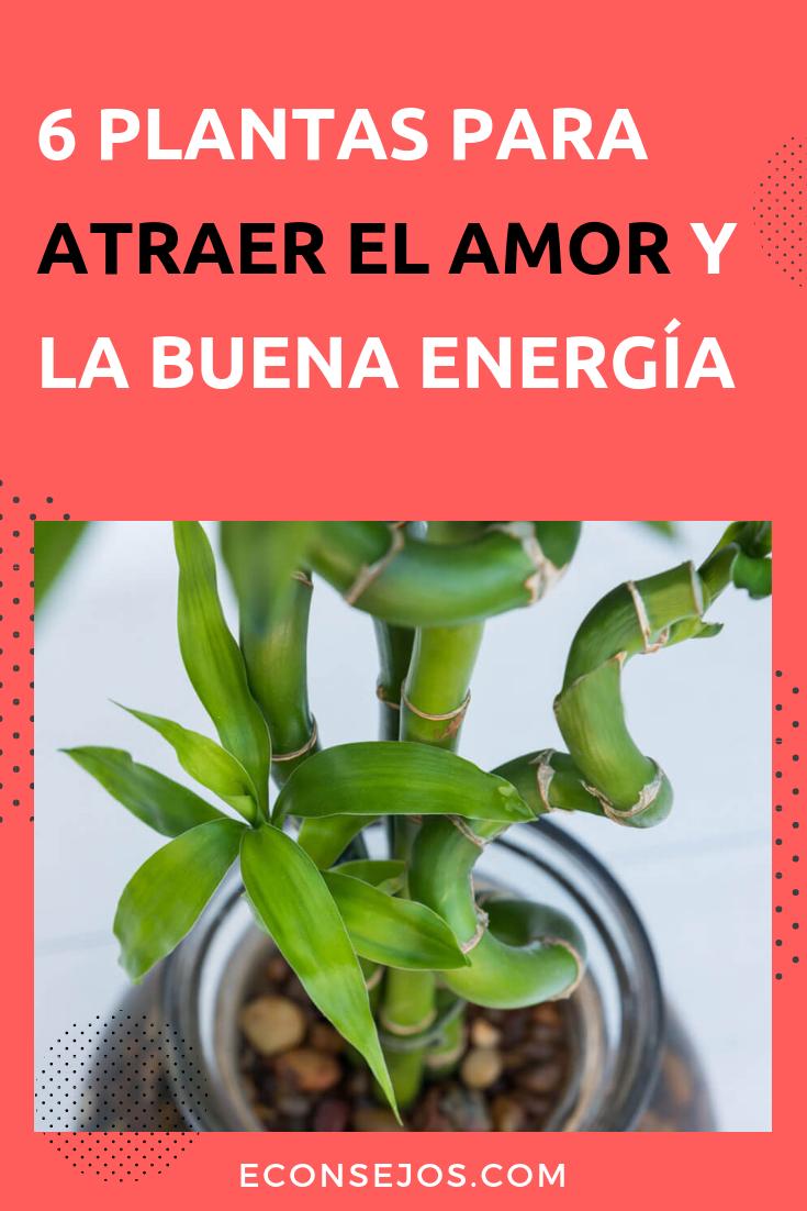 6 Plantas Que Atraen El Amor Y La Fortuna A Tu Vida Planta De La Fortuna Plantas Plantas De Jade