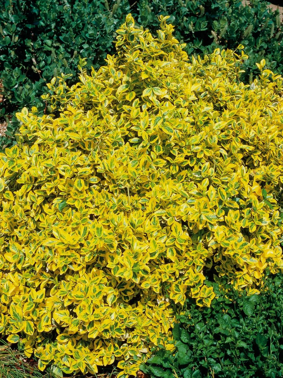 Best Yellow Annual Flowers For Your Garden Garden Plants And Yard
