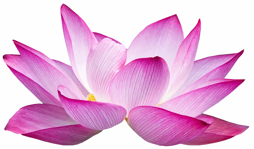 Terkeren 13 Kolase Bunga Teratai Bunga Teratai Potongan Gambar Vektor Gratis Di Pixabay Cara Menggambar Bunga Teratai D Bunga Teratai Tato Bunga Kecil Bunga