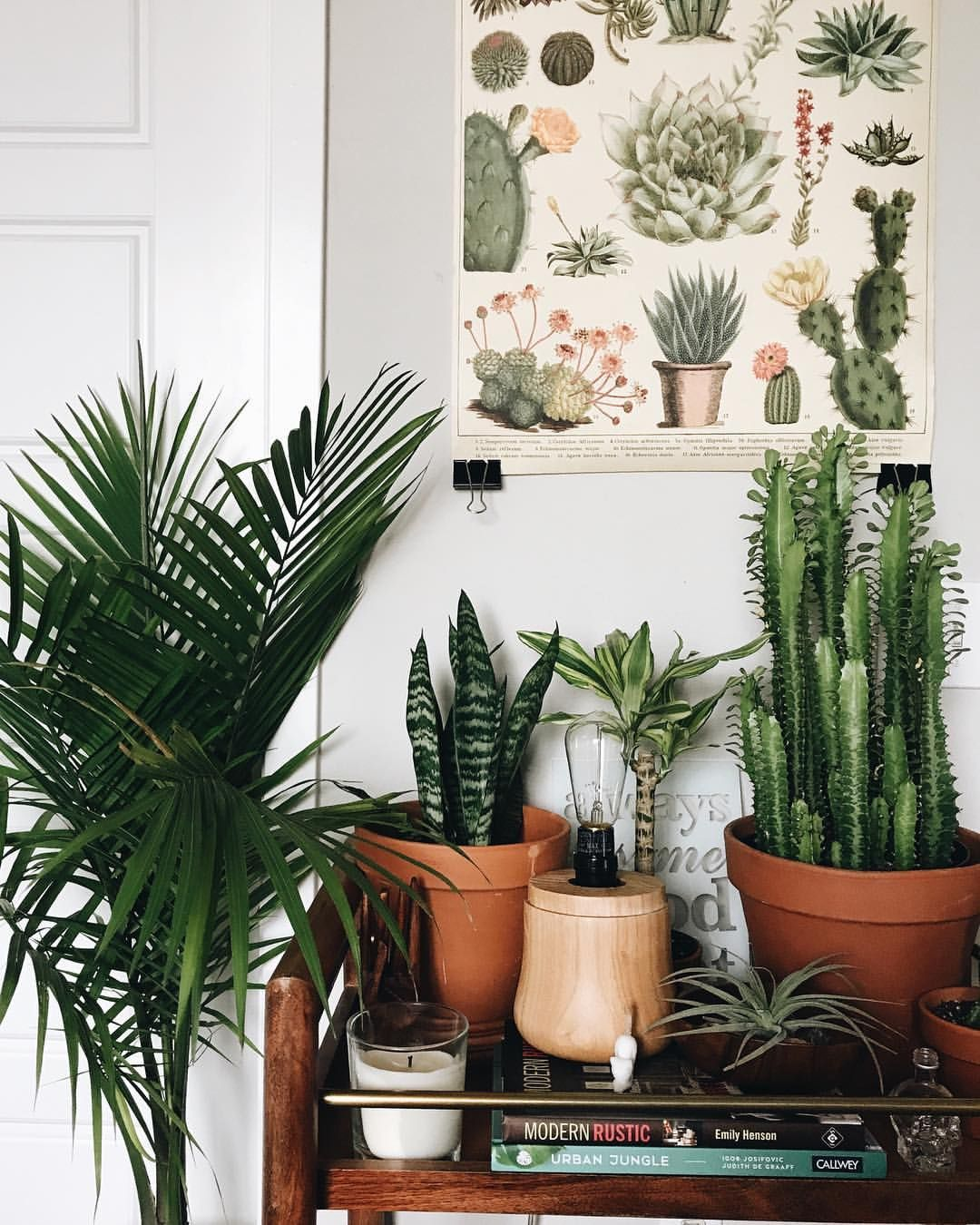 Home Decoration Ideas: Lovely Collection Of Indoor Plants Creating An Urban  Jungle. Wonderful Botanical Cacti Illustration Wall Art Too.