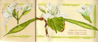 Sketching in Nature: Exotic flowers