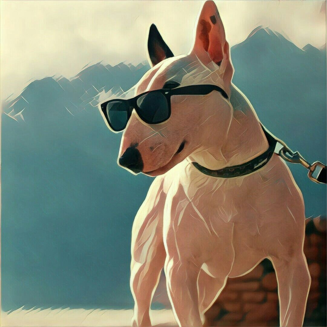 Пин от пользователя Juliett Vizarlo на доске Terrier Love ...
