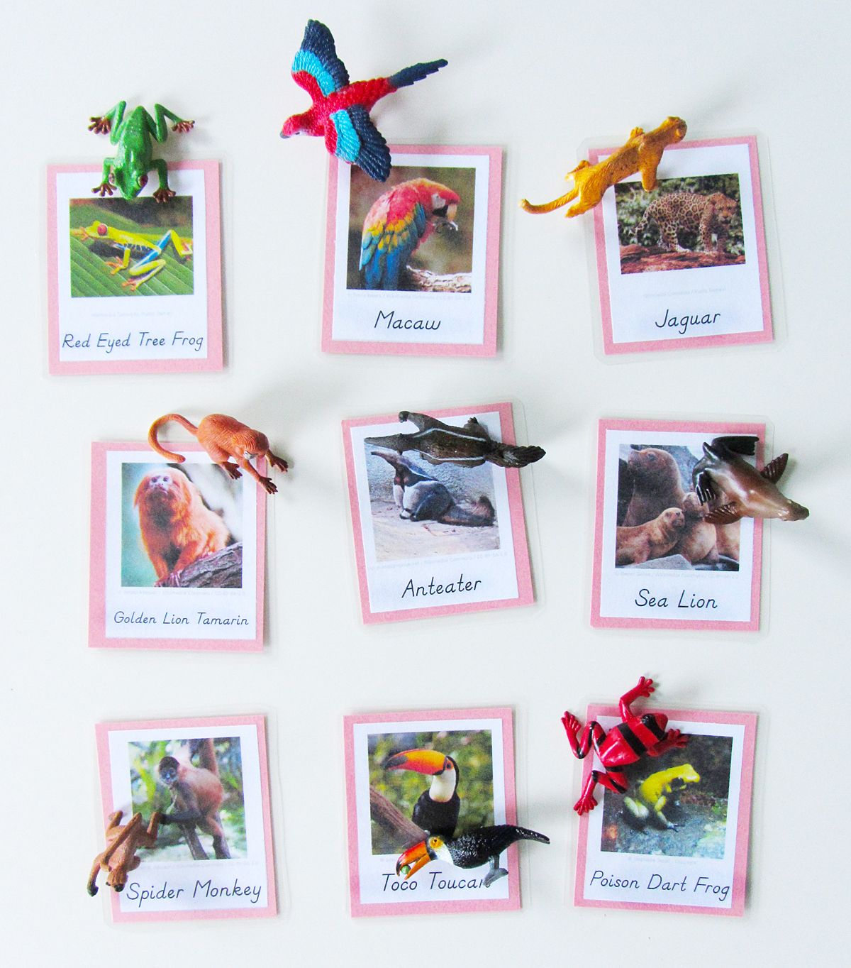 Animals Of South America For The Montessori Wall Map Amp Quietbook With Printables