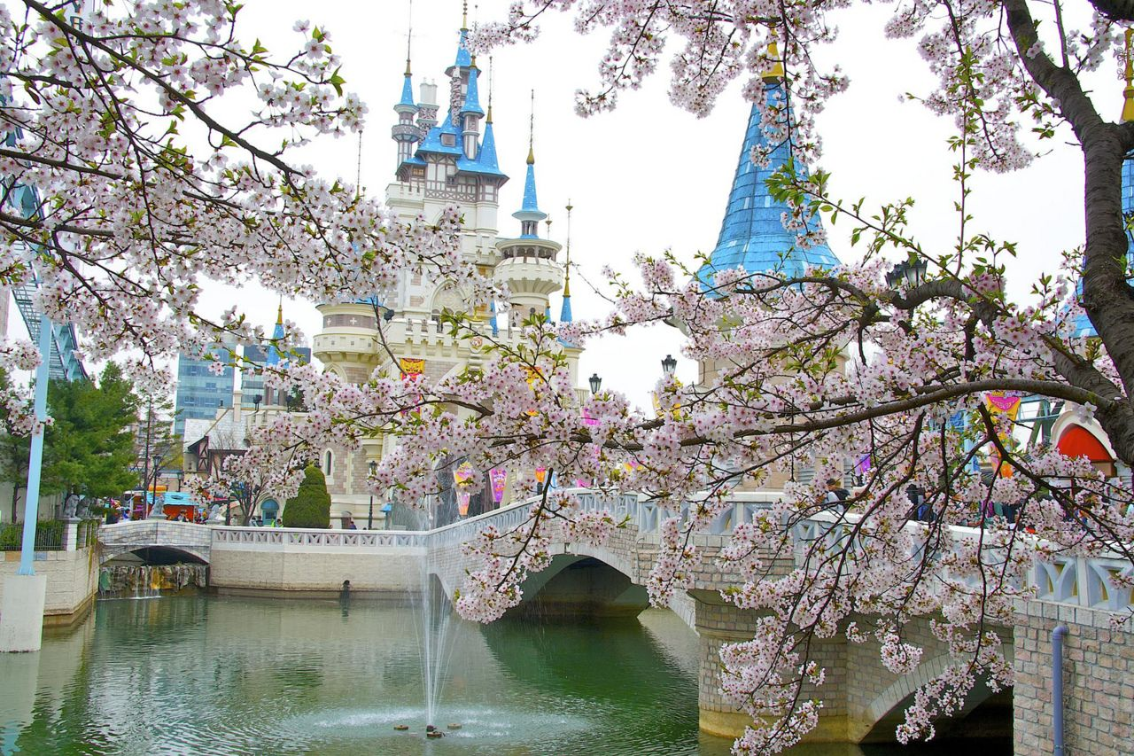 Cherry Blossom In Lotte World Breath Taking Photos Lotte World