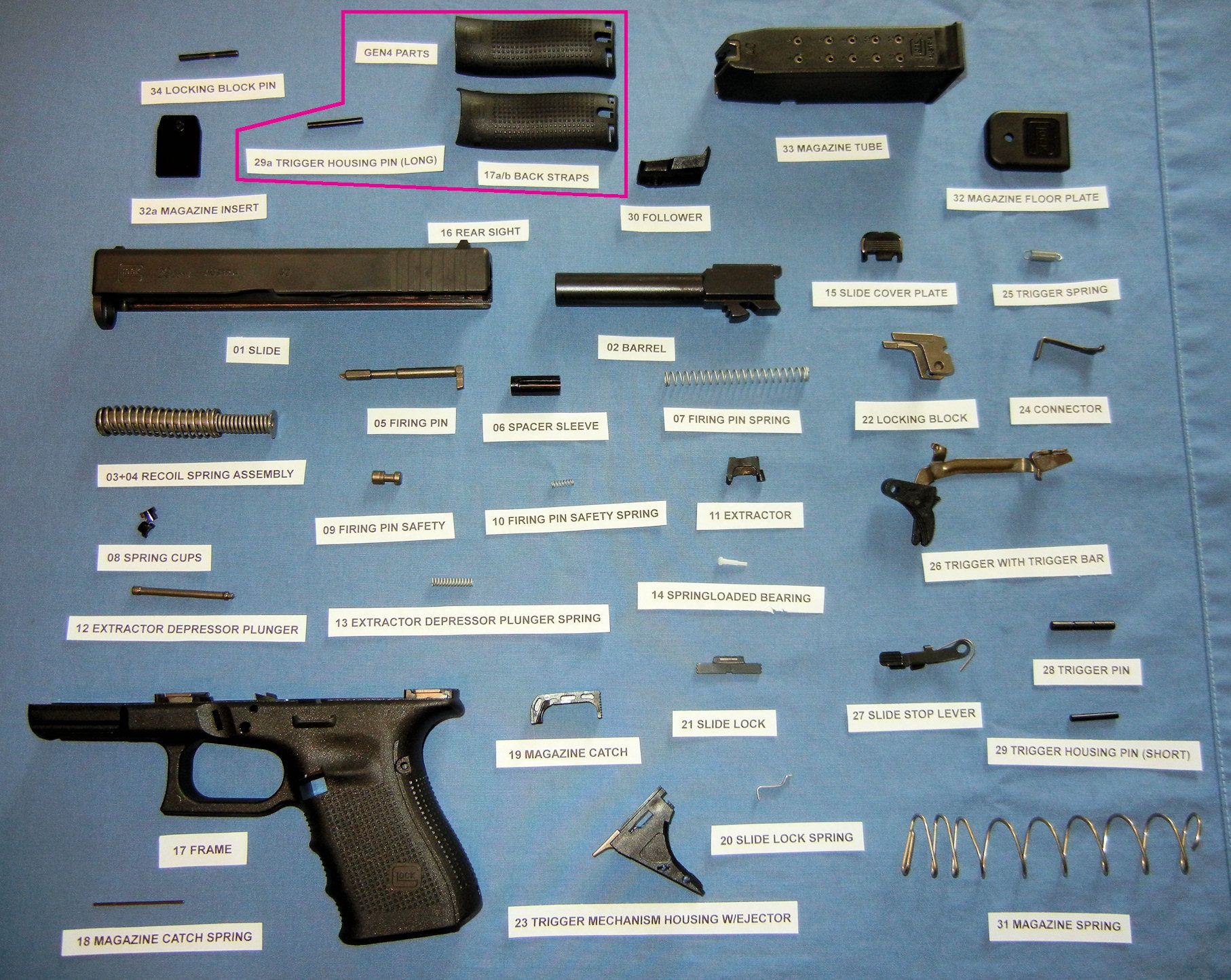 A Glock Series Pistol labeled and broken down into its 34 parts ...