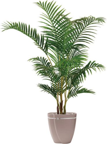 Best Artificial 150cm 5ft Areca Palm Tree Plant. Perfect For Office Indoor  Conservatory House