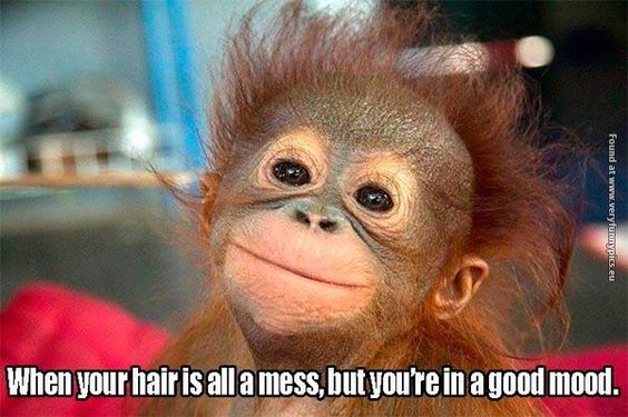 Funny Pictures Messy Hair But Good Mood Smiling Animals Funny Animal Pictures Funny Pictures