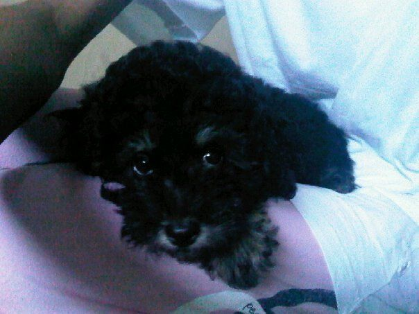 Moms little dog Bridgette looked like this little one