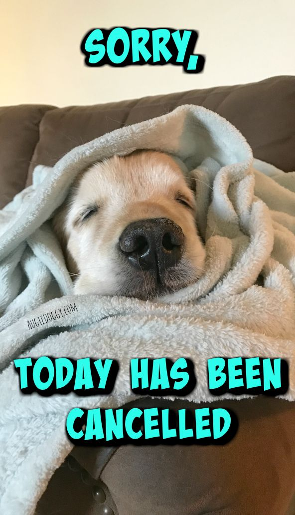 Sorry Today Has Been Cancelled Quote Sleeping With Images