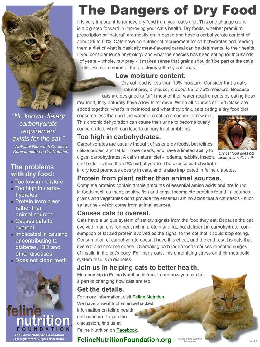 One Page Guide The Dangers Of Dry Food Cat Nutrition Cat Care Cats