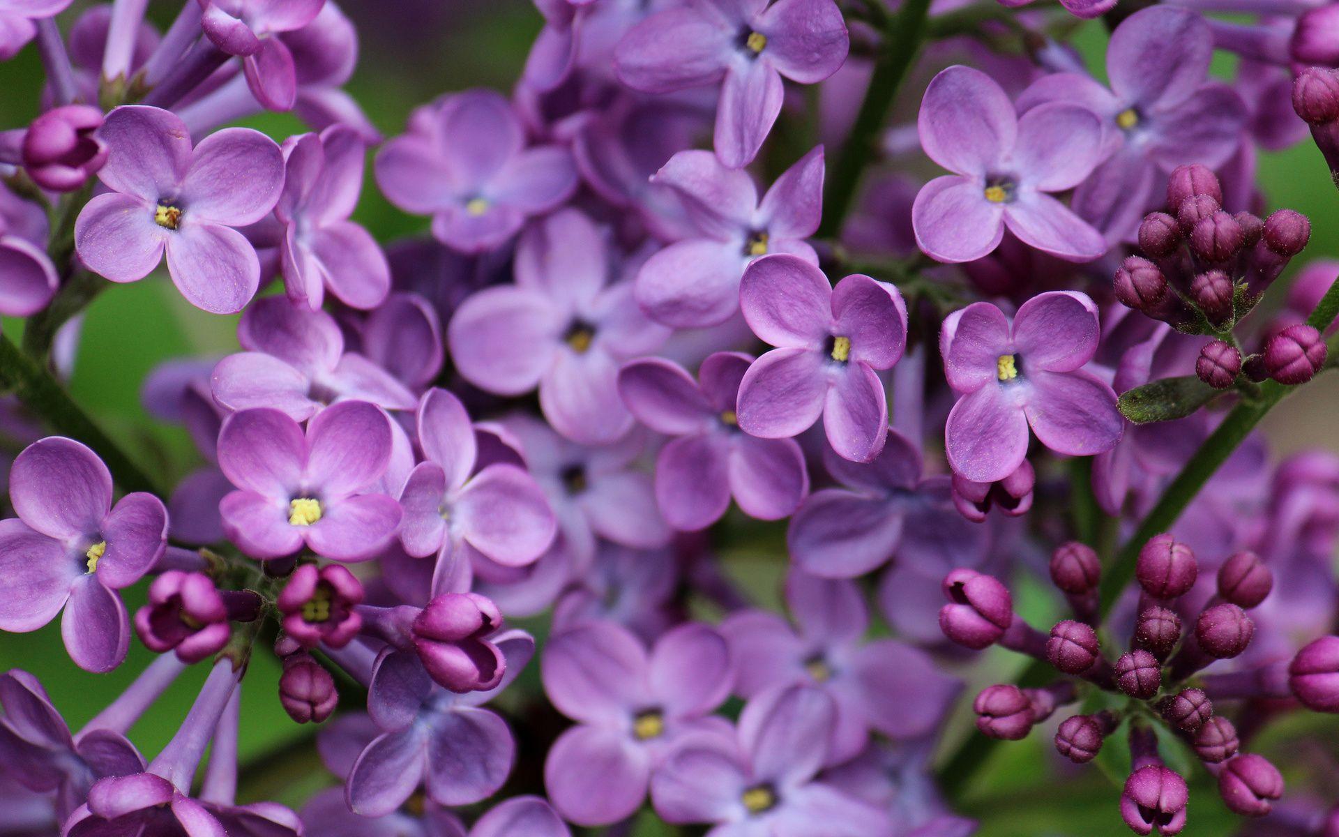 500 Internal Server Error Lilac Flowers Flower Wallpaper Art Therapy Activities