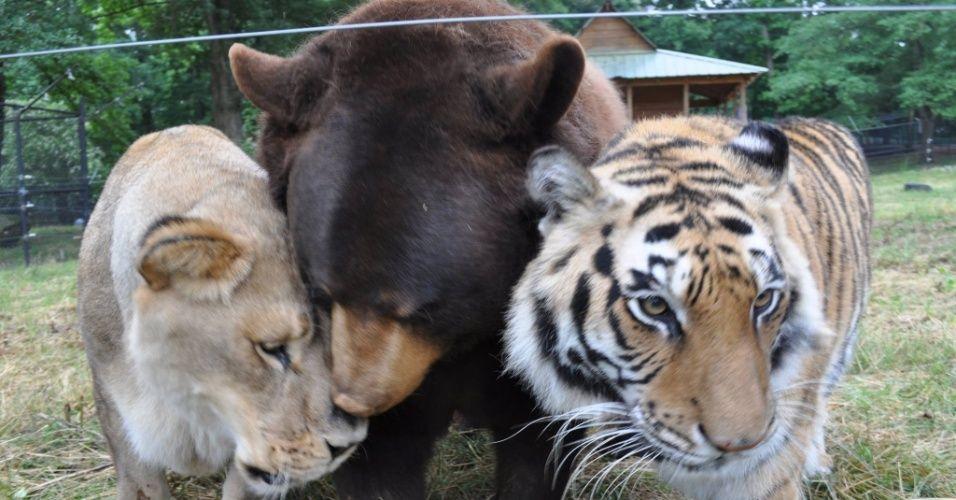 Amizade entre leão, urso e tigre foi destaque na semana. Veja mais - Fotos - UOL Notícias