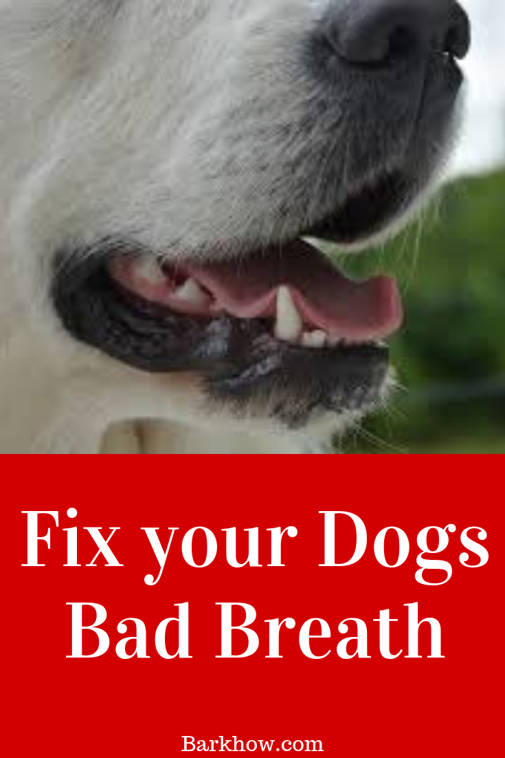 How to Fix Your Dog's Bad Breath Problem Natural Remedies
