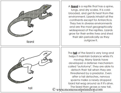 Lizard Nomenclature Book Elementary Science Activities Lizard Montessori Lessons