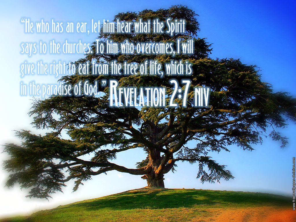 tree pictures with scripture verses revelation 2 7 tree of life wallpaper christian. Black Bedroom Furniture Sets. Home Design Ideas
