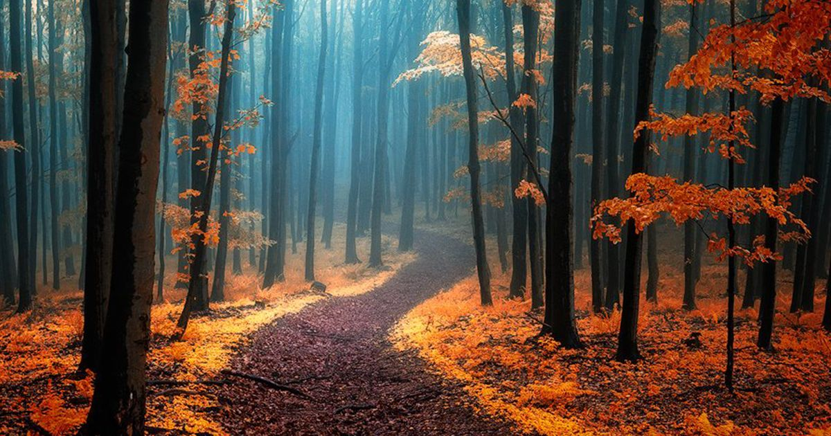 Dream Like Autumn Forests By Czech Photographer Janek Sedlar Nature Photography Forest Photography Autumn Forest