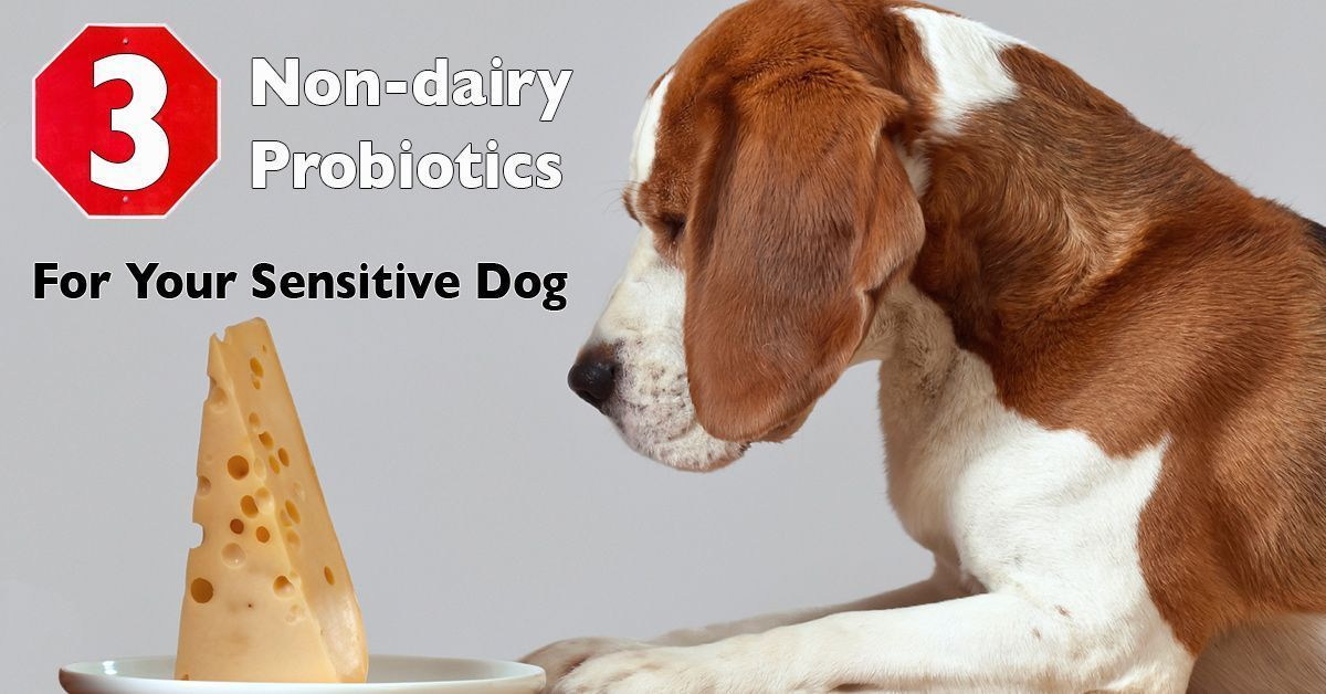 3 Non-Dairy Probiotics For Your Dog Three Non Dairy Probiotics For Your DogThree Non Dairy Probiotics For Your Dog