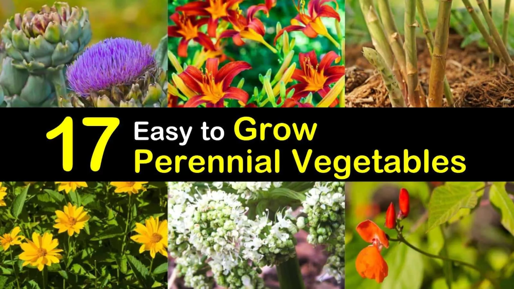 17 Perennial Vegetables To Pinch Pennies And Eat Like A King Perennial Vegetables Perennials Best Perennials