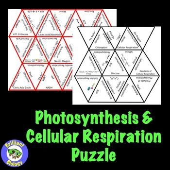 Cultivating New Literacies Through ICTs  Using Photosynthesis as an Example Pinterest