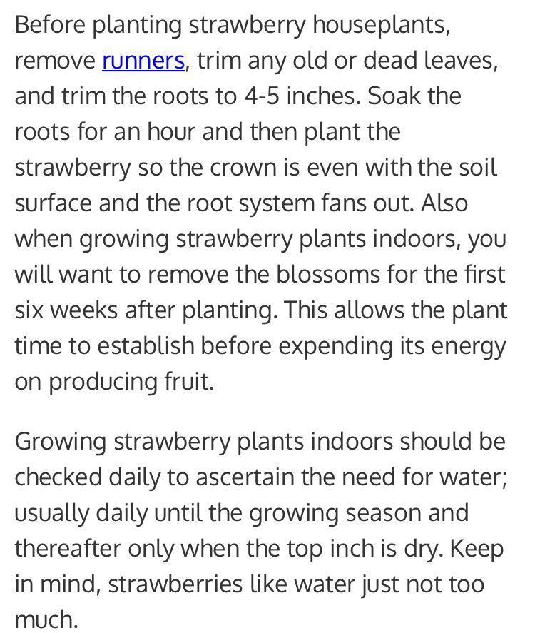 Carrying for indoor strawberries