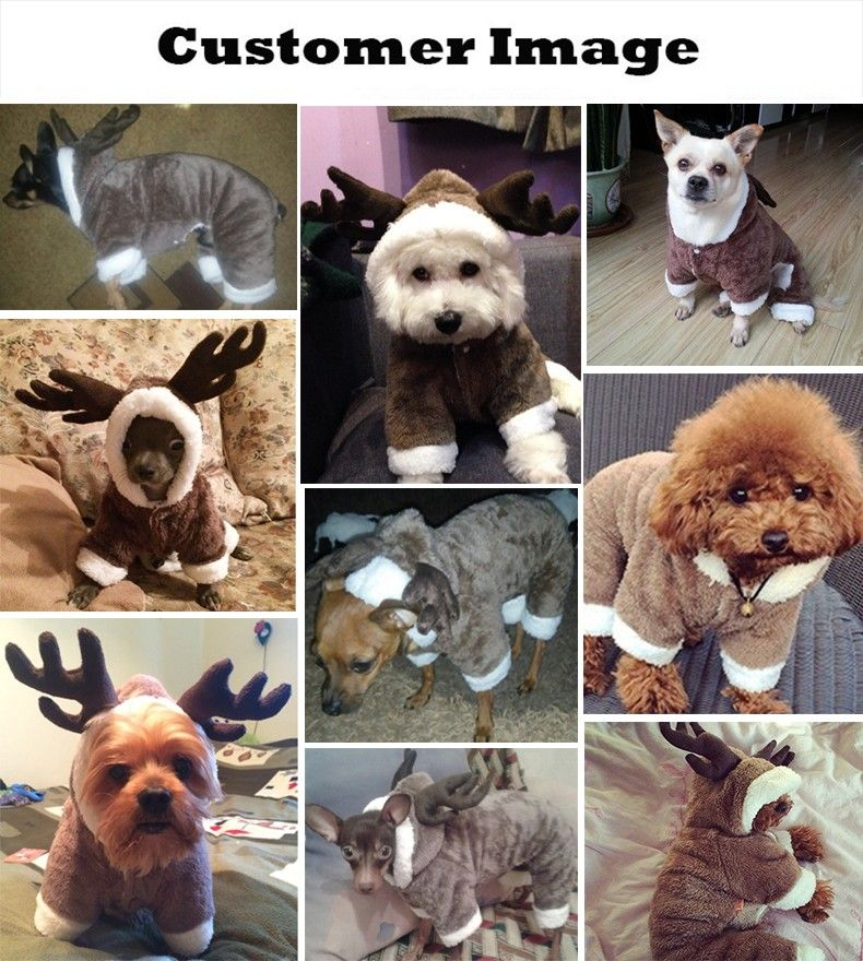 Chow Chow Puppy Harga 2021 at puppies - budgetrevenue ...
