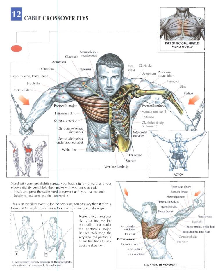 Cable crossover flys Chest workouts, Workout routine
