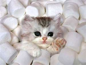 Pin By Rene Inge On Silly Kittens Kittens Cutest Cute Baby Animals Cute Animals