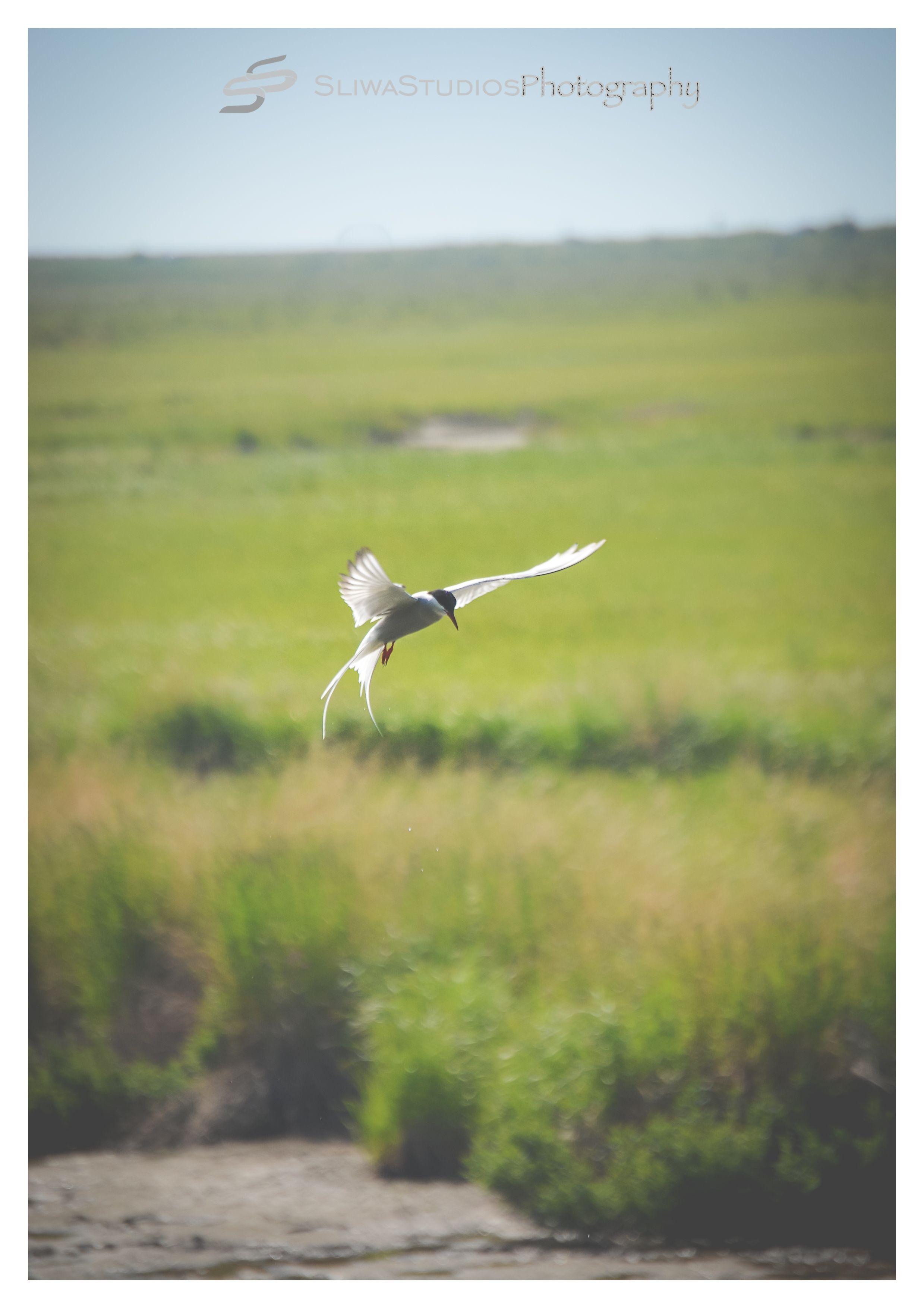Alaska| Plains Bird 2015| Orlando Photographer| Landscape Photography| Sliwa Studios Photography