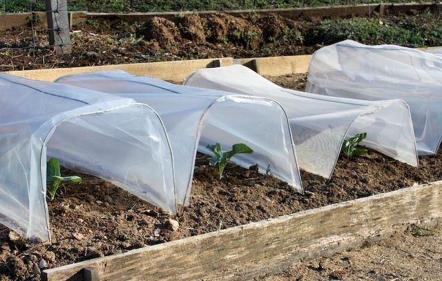 Award Winning Garden Writer Barbara Pleasant Discusses How To Sew Plastic  Cloches And Vegetable Garden Row Covers, With Pictures