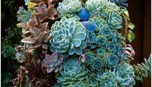 12 Amazing Succulent Arrangements