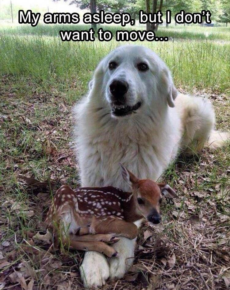 Funny Animal Pictures Of The Day Pics Funny Animals - 25 heartwarming moments animals hugging