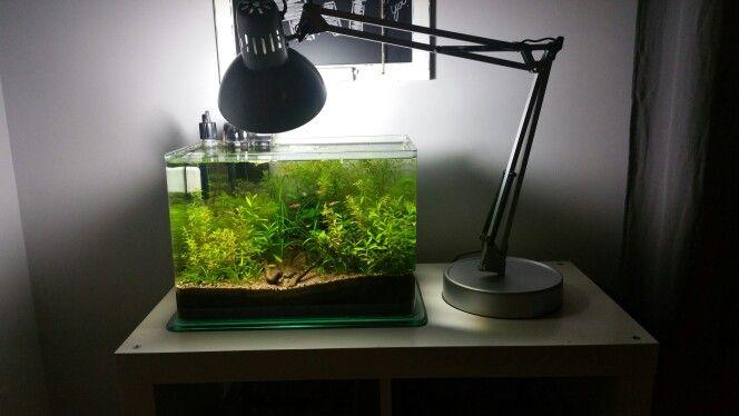 Aquarium and desk Lamp. . . I love it!