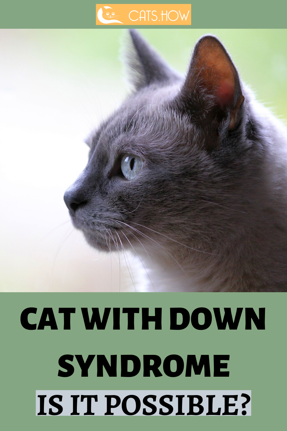 ᐉ Cat With Down Syndrome Is It Possible Down syndrome