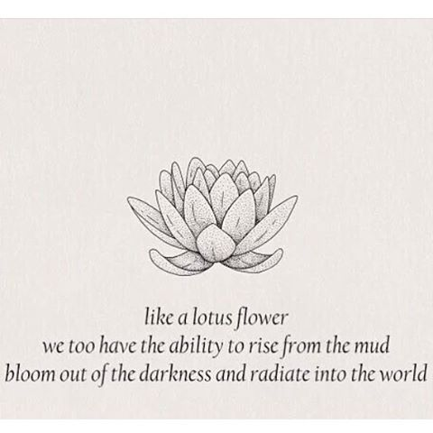 Even Being Surrounded By Mud The Lotus Flower Still Blossoms
