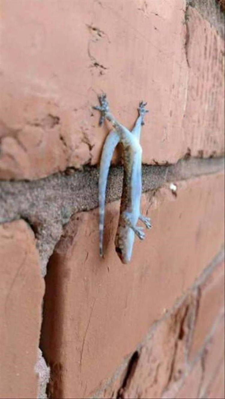 Can Someone Please Explain Me These Weird Animal Photos?