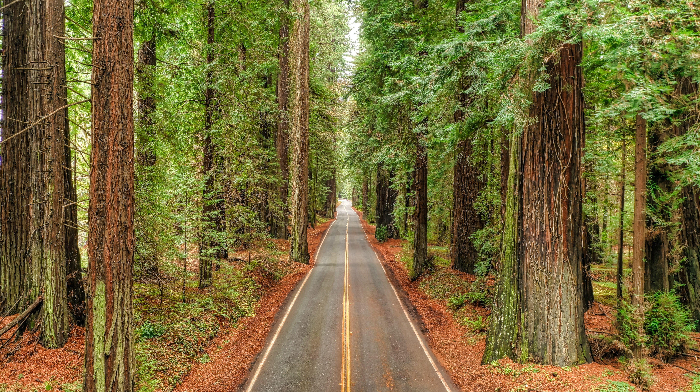 Avenue of the giants humboldt county california photo