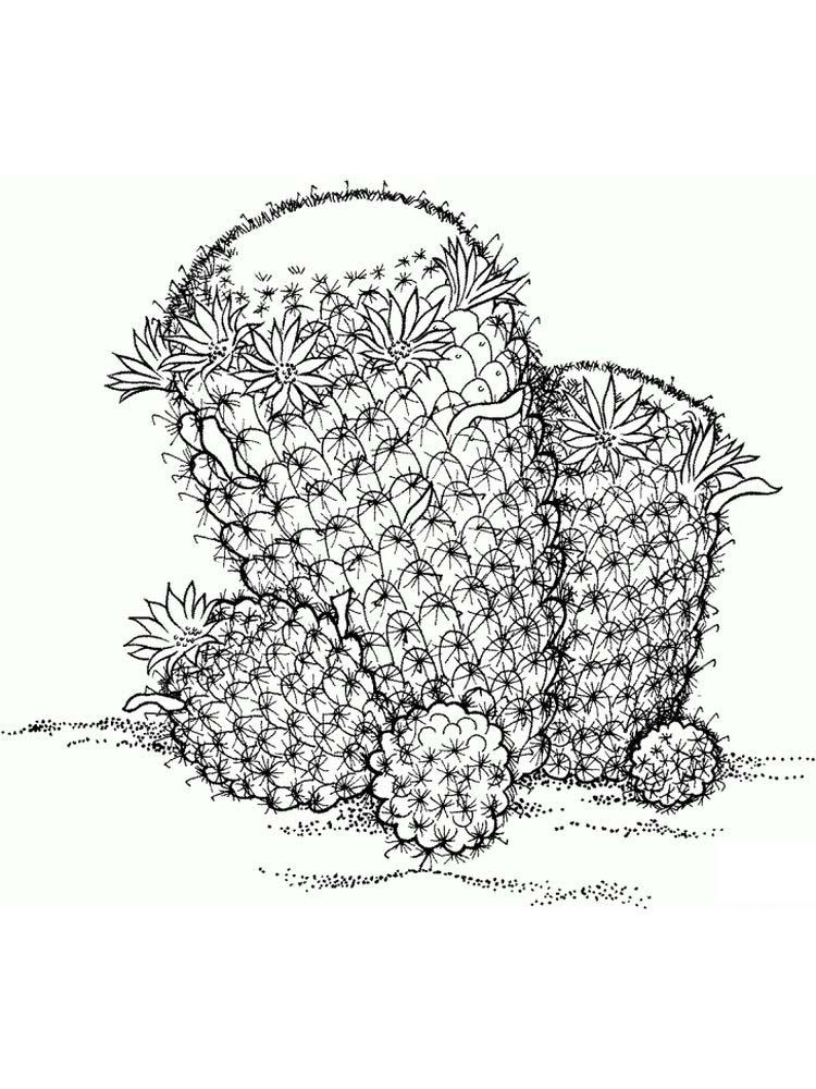 Plant And Animal Cell Coloring Page Key Plants Are One Of The Creatures That Occupy This Earth Hi Animal Coloring Pages Plant And Animal Cells Coloring Pages