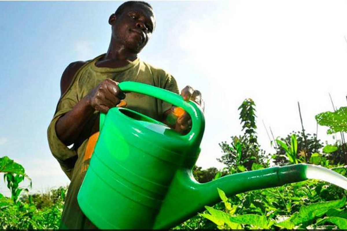 Agric Insurance Offers Risk Mitigation To Farmers Water