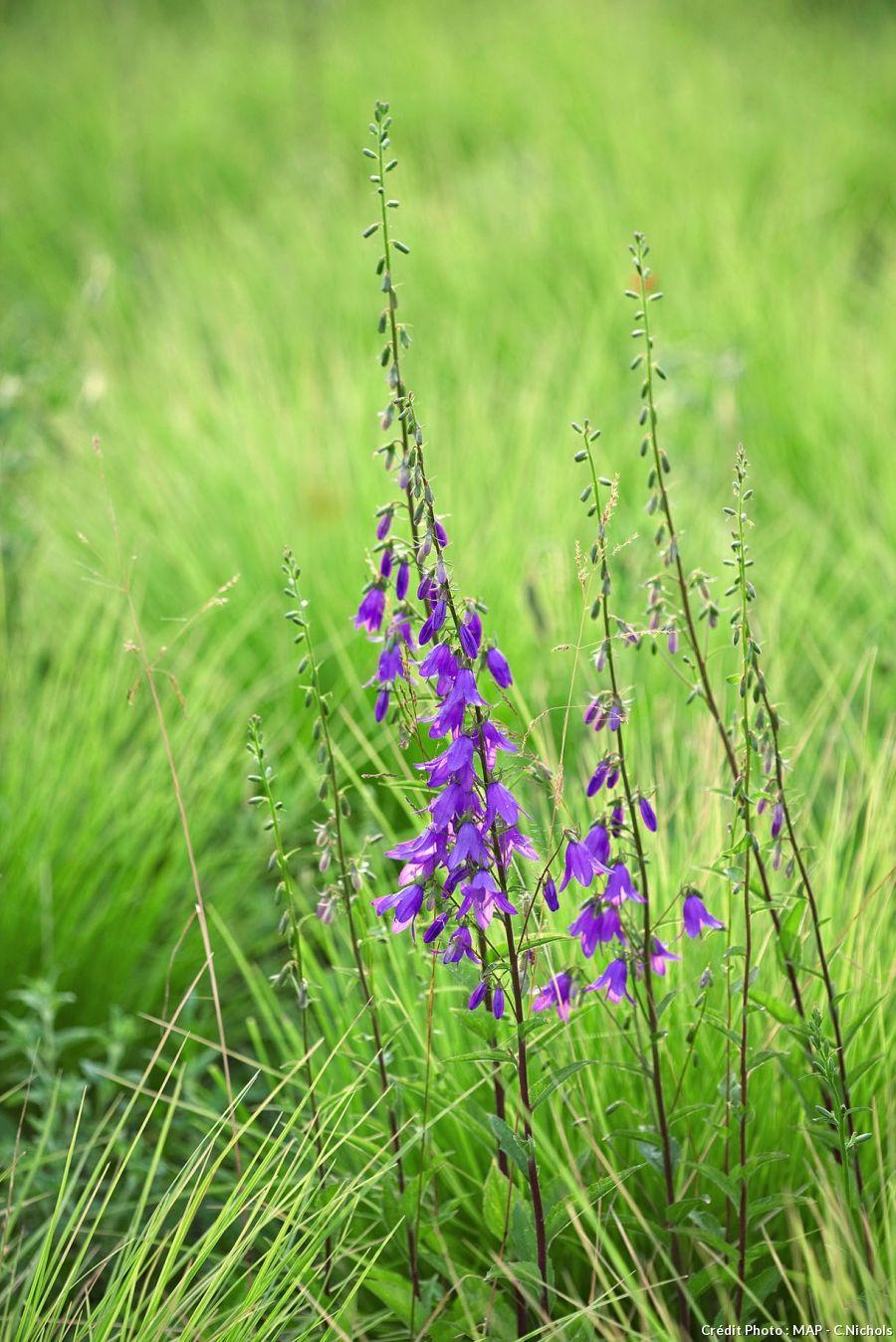 9 plantes sauvages à cultiver au jardin Plantes sauvages